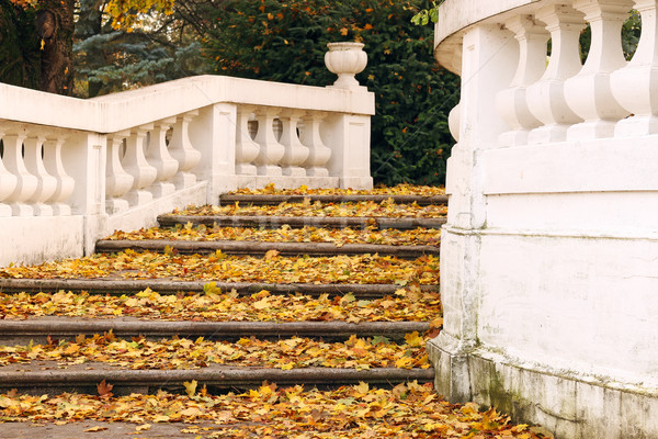 stone staircase with fallen leaves autumn season Stock photo © goce