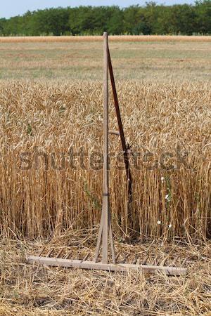 Campo de trigo edad rastrillo cielo verano Foto stock © goce