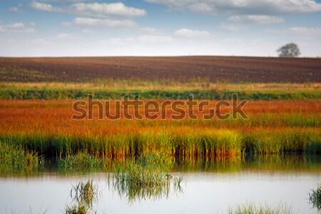 Moeras veld landschap wolken natuur Stockfoto © goce