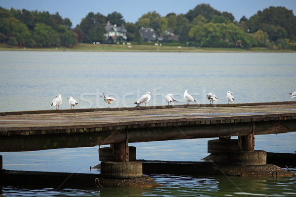 Mouettes stand pier lac Serbie paysage Photo stock © goce