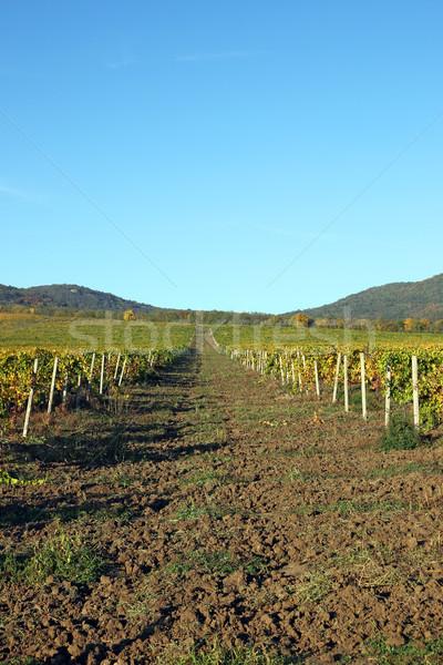 Szőlőskert dombok tájkép őszi idény mezőgazdaság gyümölcs Stock fotó © goce