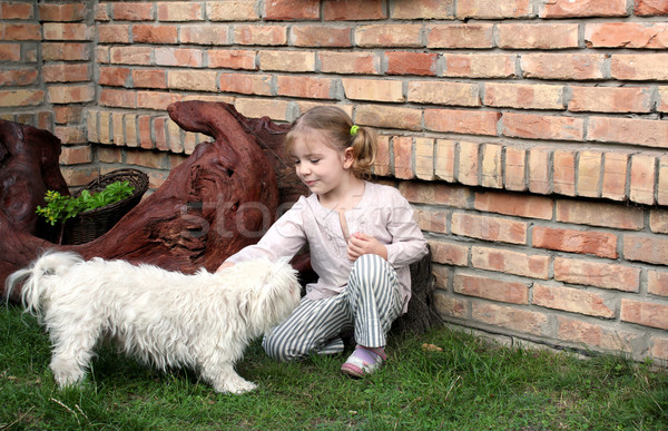 beauty little girl play with Maltese puppy pet Stock photo © goce