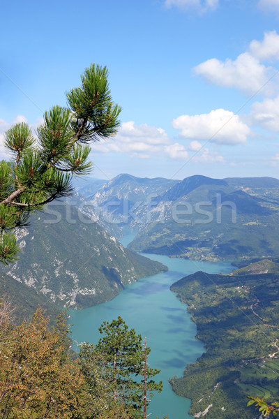 Banjska stena Tara mountain viewpoint Stock photo © goce