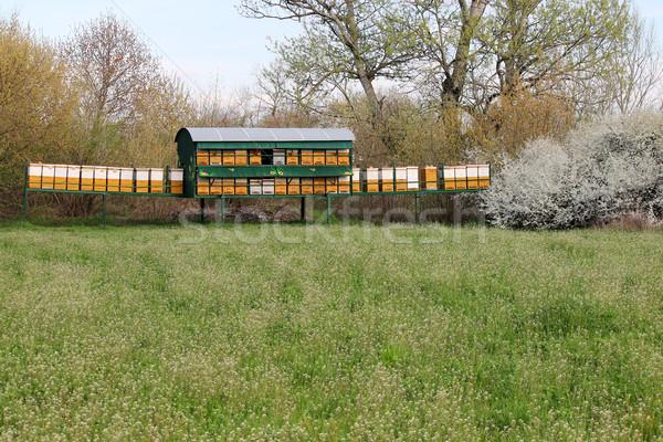 Méh zöld mező tavasz évszak étel Stock fotó © goce