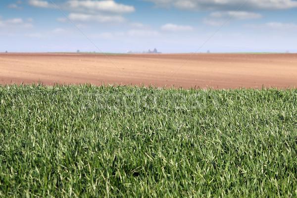 Verde campo de trigo país paisaje primavera temporada Foto stock © goce