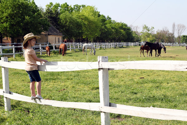 Stock photo: little girl standing on the corral and watching horses