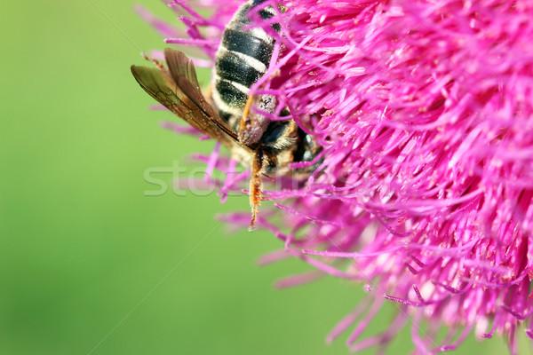Arı çiçek bahar sezon doğa yaz Stok fotoğraf © goce