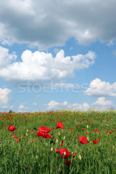 Stok fotoğraf: Haşhaş · çiçekler · mavi · gökyüzü · çayır · manzara · çiçek