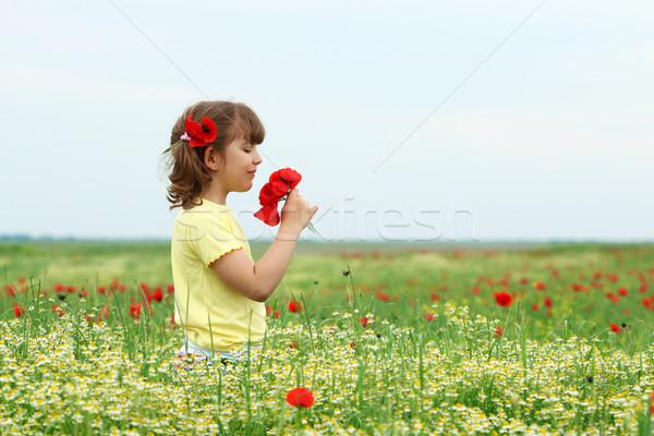 Stok fotoğraf: Güzel · küçük · kız · haşhaş · çiçekler · çayır · bahar