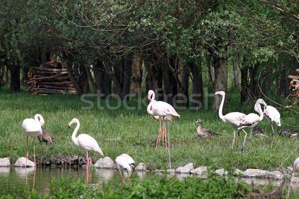 Sereg tavacska víz madár toll madarak Stock fotó © goce