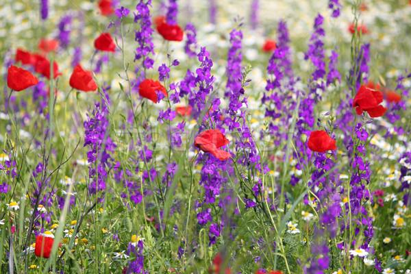 Primavera pradera flores silvestres naturaleza verano verde Foto stock © goce