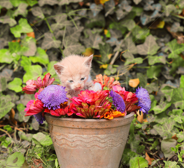 Stock photo: kitten in a vase with flowers