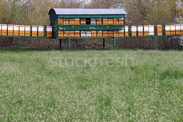 Arı çayır bahar gıda kutu yeşil Stok fotoğraf © goce