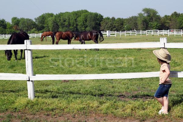 Petite fille regarder troupeau chevaux fille nature Photo stock © goce