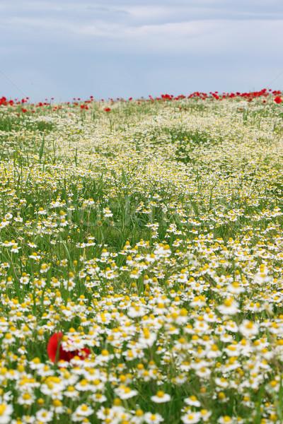 Vad virágok legelő tájkép tavasz évszak virág Stock fotó © goce