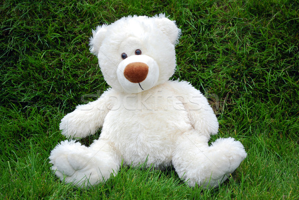 white teddy-bear Stock photo © goce