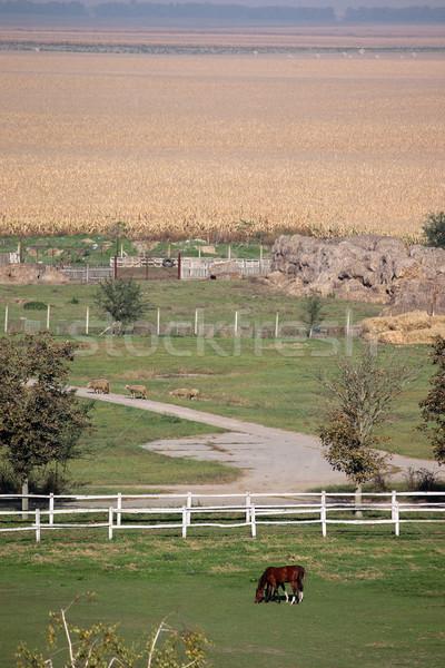 horses in corral on farm Stock photo © goce