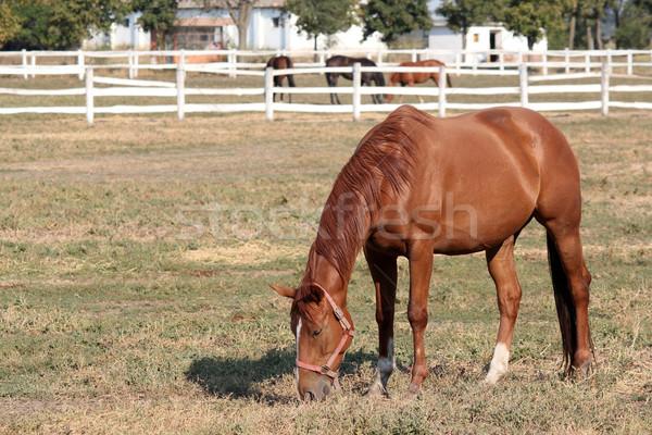 лошадей ранчо сцена природы лошади области Сток-фото © goce