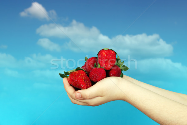 strawberries at a children's hand  Stock photo © goce