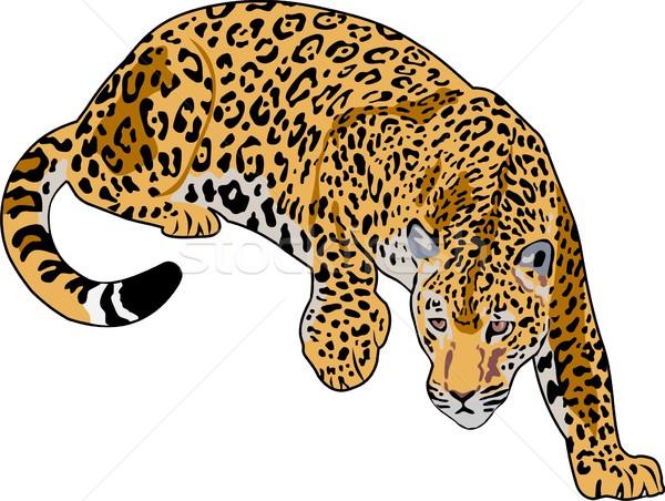 jaguar Stock photo © goce