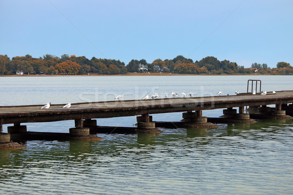 Seagulls stand on the pier Palic lake landscape Stock photo © goce