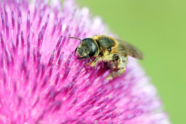 Bee bloem bloemen achtergrond zomer Stockfoto © goce