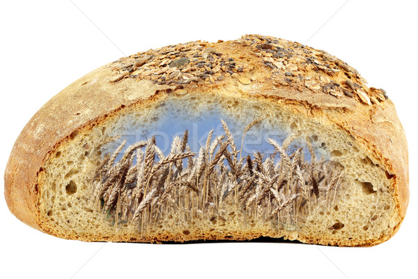 bread and golden wheat Stock photo © goce