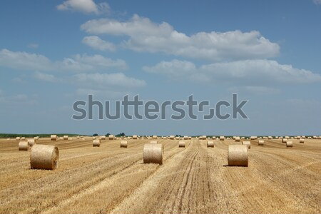 straw bale field Stock photo © goce