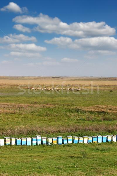 Arı kovan alan manzara gökyüzü yeşil Stok fotoğraf © goce