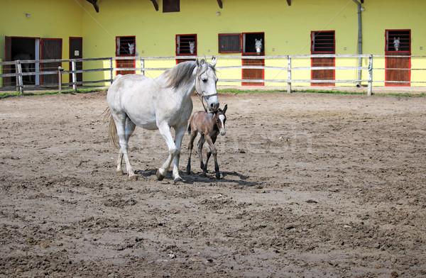 ранчо лошадей природы лошади Открытый млекопитающее Сток-фото © goce