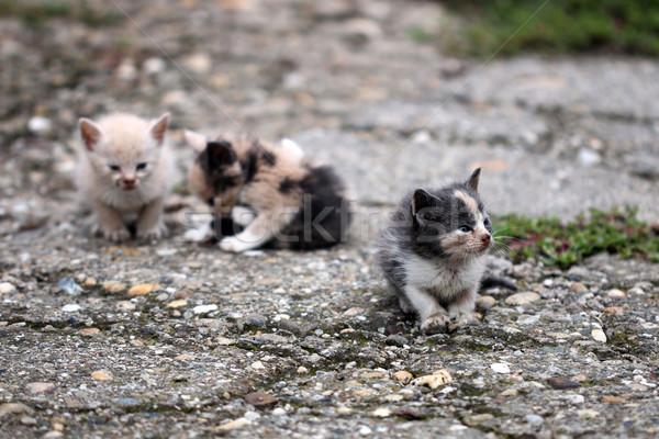 Trzy opuszczony kocięta ulicy smutne kotów Zdjęcia stock © goce