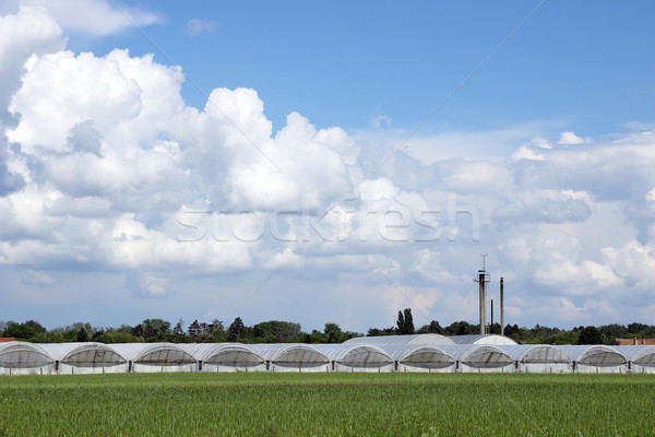Stock photo: greenhouse on field agriculture industry