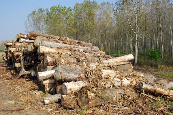 Yakacak odun orman ağaç Stok fotoğraf © goce