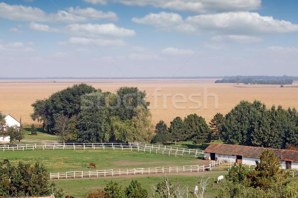 Granja caballos paisaje naturaleza caballo verano Foto stock © goce