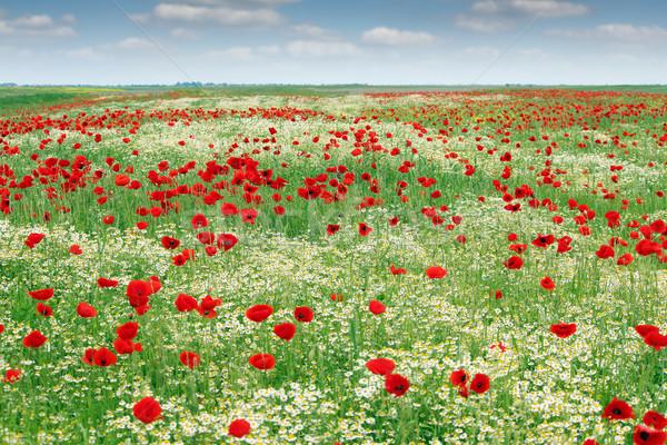 Flores silvestres prado paisagem primavera temporada céu Foto stock © goce