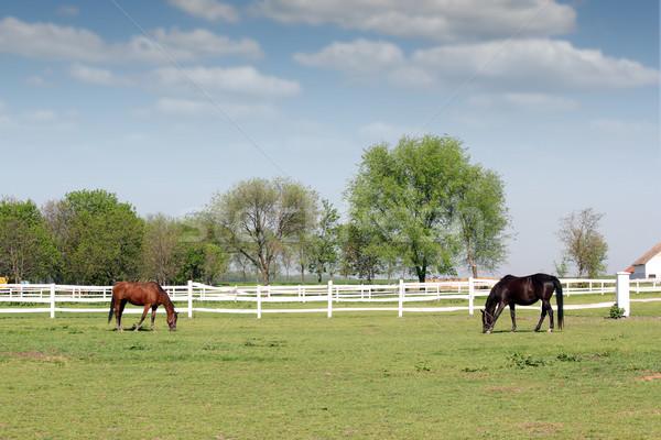 brown and black horse in corral farm scene Stock photo © goce