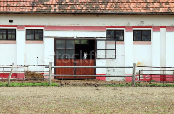 стабильный white horse спорт двери фермы белый Сток-фото © goce