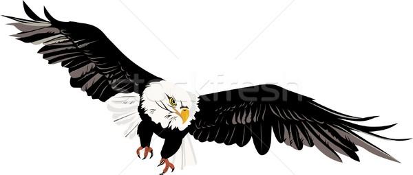 Chauve aigle blanche animaux croisière aile Photo stock © goce