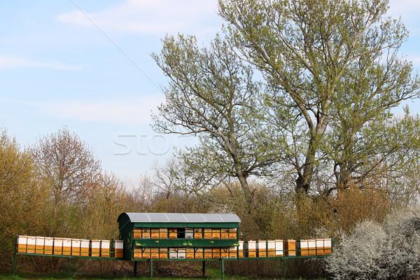 Arı çayır bahar sezon gıda kutu Stok fotoğraf © goce