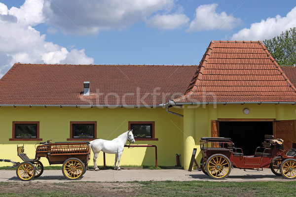 white horse and old carriage on ranch Stock photo © goce