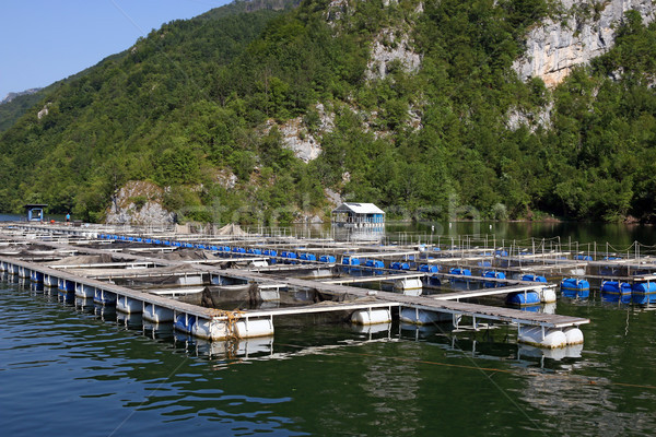 trout hatchery on river agriculture industry Stock photo © goce