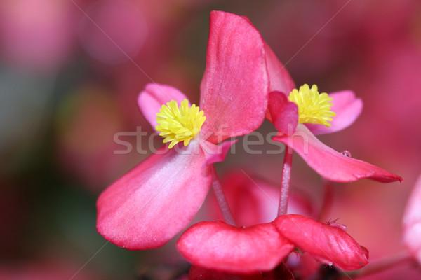 Virág közelkép természet szépség narancs növény Stock fotó © goce