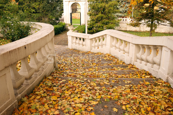fallen leaves on staircase autumn season Stock photo © goce