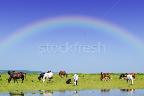 Chevaux Rainbow ciel eau nature cheval Photo stock © goce
