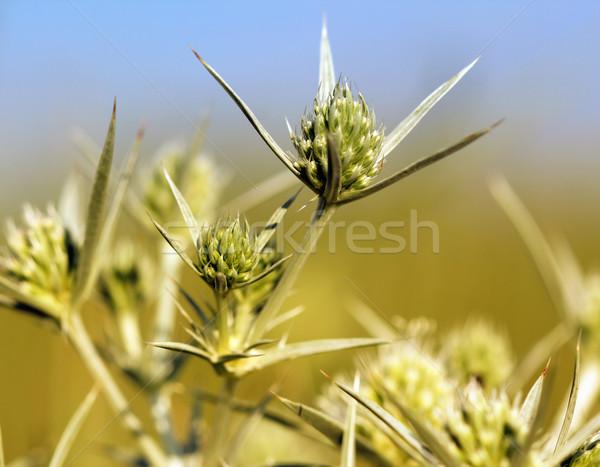Foto stock: Verde · flores · silvestres · primavera · temporada · flor · grama