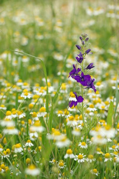 Сток-фото: луговой · весны · сезон · небе · пейзаж