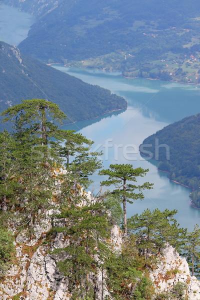 Pine trees on Tara mountain Serbia landscape Stock photo © goce
