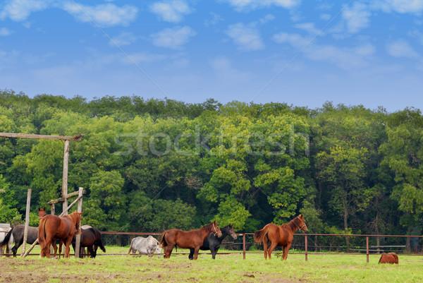 farm scene with horses Stock photo © goce