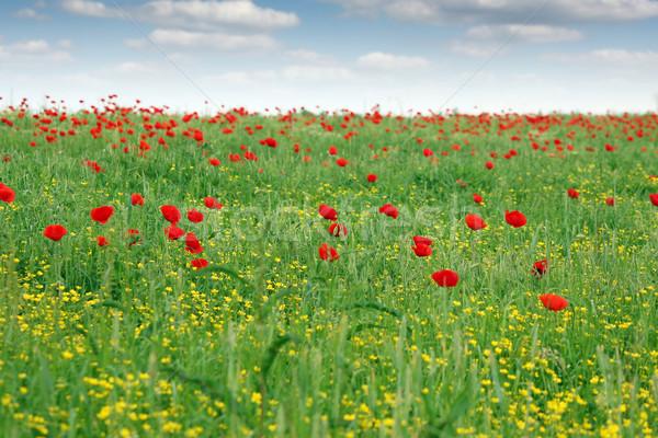 Primavera pradera flores silvestres paisaje cielo flor Foto stock © goce