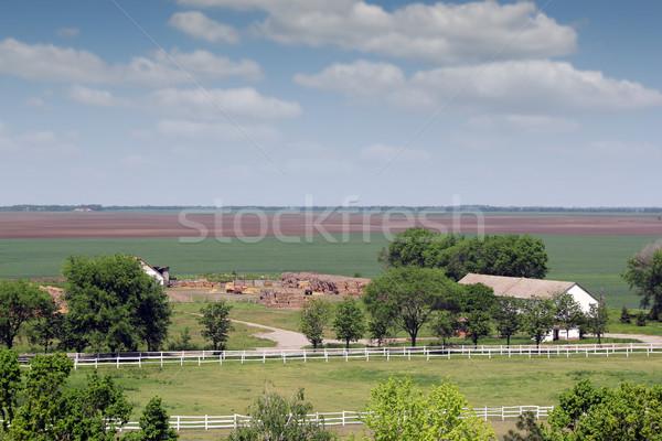 Ackerland Pferd Landschaft Himmel Baum Bereich Stock foto © goce